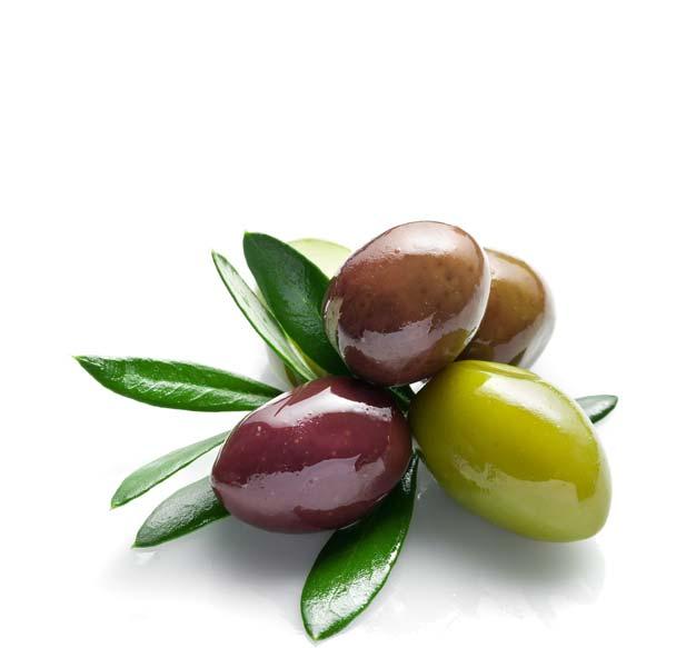 Fornitura olio extravergine di oliva toscano per ristoranti