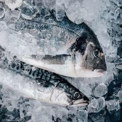 Fornitura pesce per ristoranti