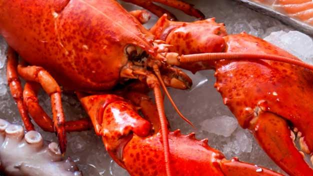 Fornitura pesce per ristoranti: crostacei
